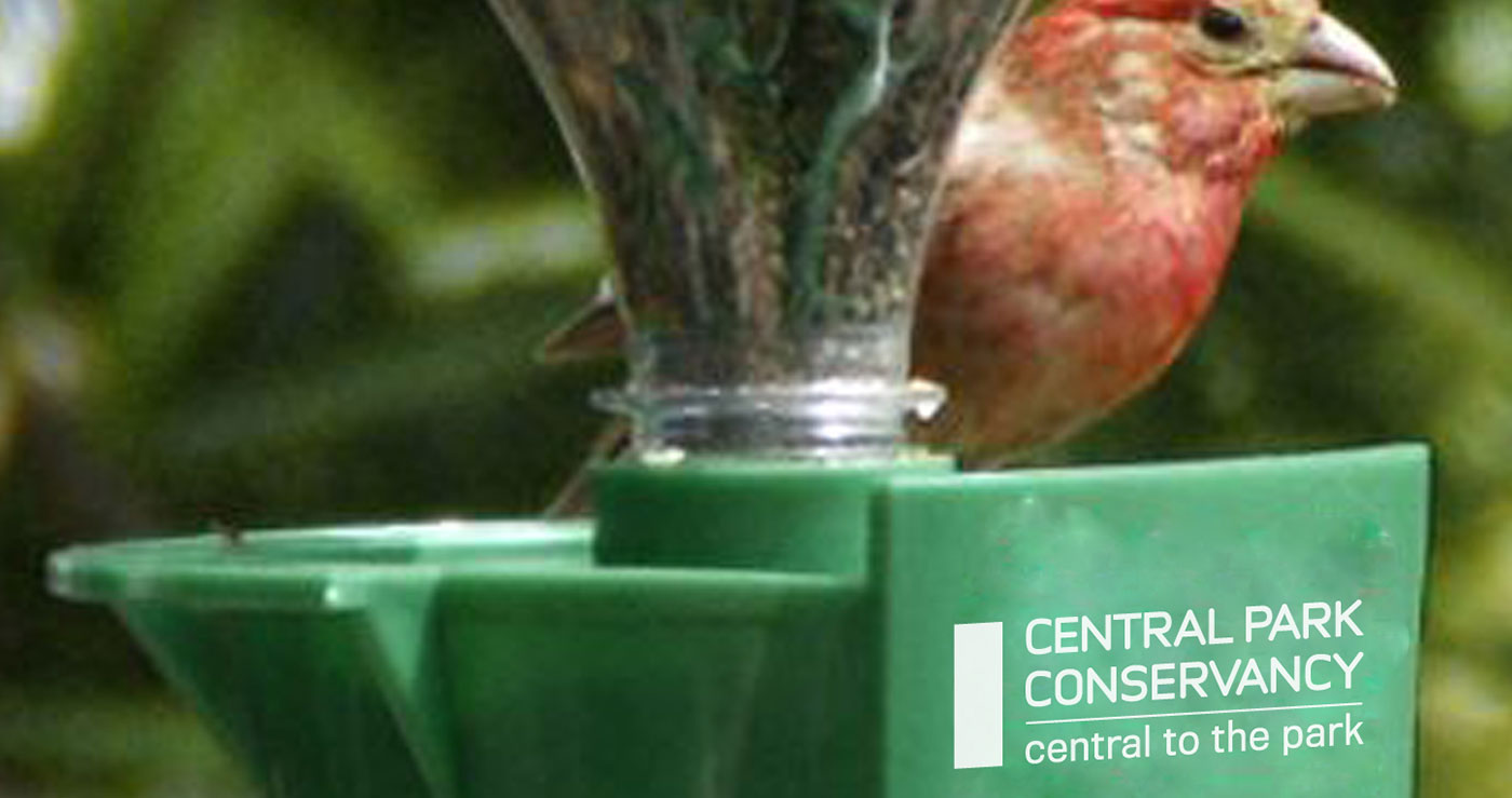 Branded Merchandise for Central Park Conservancy